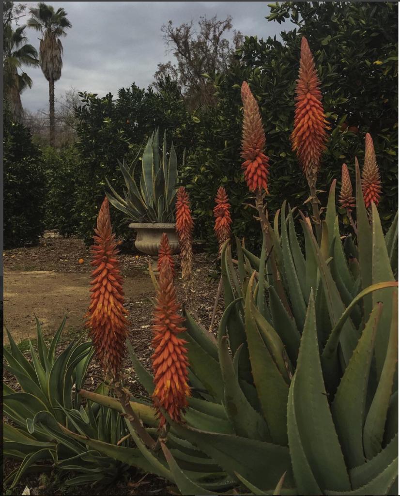 The miraculous Arlington Gardens in Pasadena! - McCormick Interiors